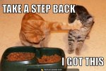 cat meme: take a step back--i got this